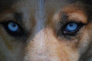 eyes-712125_960_720